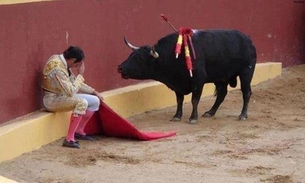 Это невероятное фото знаменует собой конец карьеры матадора Альваро Мунеро. Он упал в раскаянии в ...