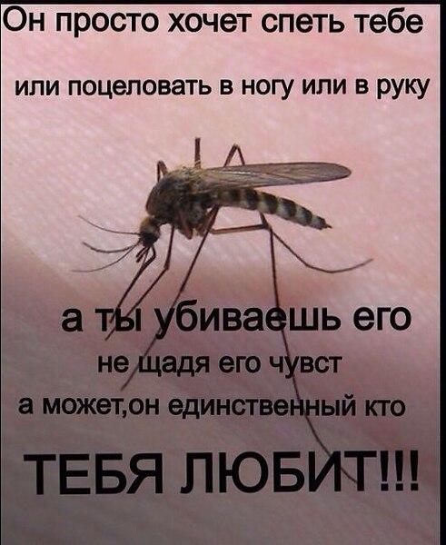 Шаром своими, картинки про комаров прикольные