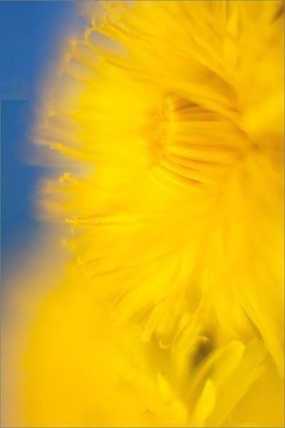 Жду весну... И солнце... И одуванчиков - 3