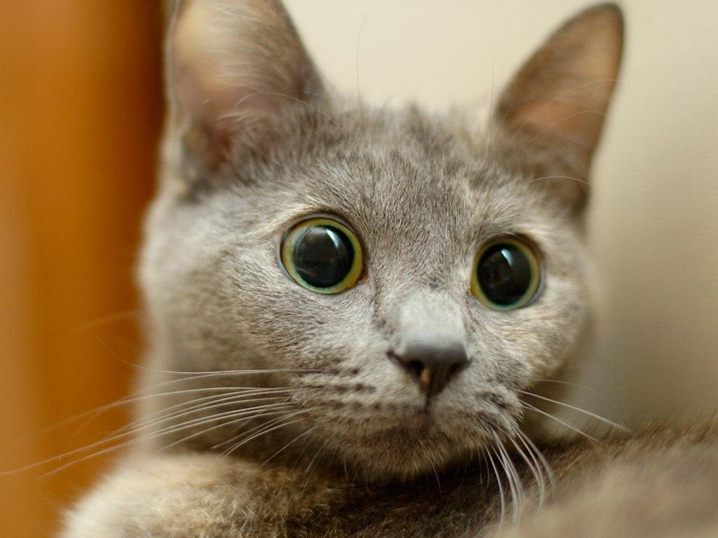 Картинки котов с прикольными глазами