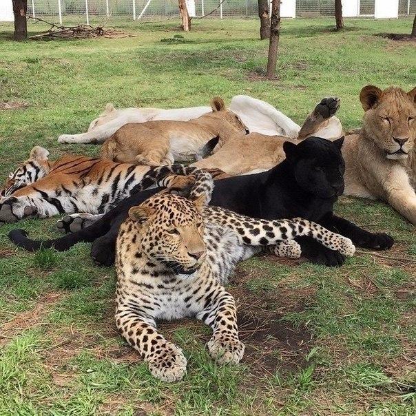 Кошачье ассорти