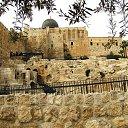 Фото Мышь, Иерусалим, 100 лет - добавлено 16 октября 2019