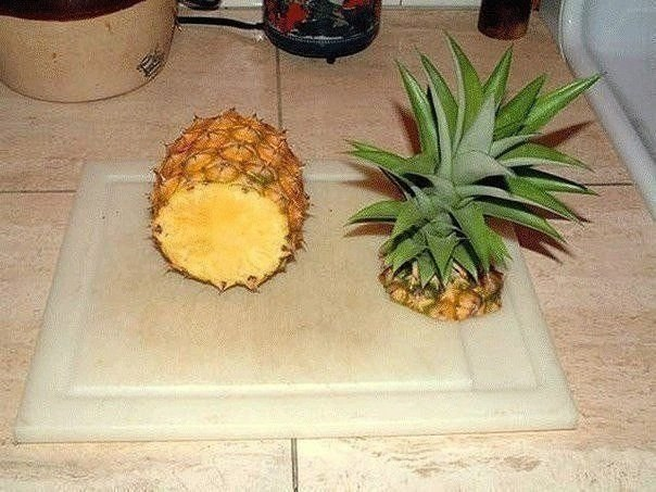 Проращиваем ананасик дома! - 2